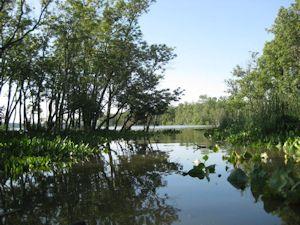 Dyke Marsh Inlet