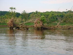 Dyke Marsh erosion